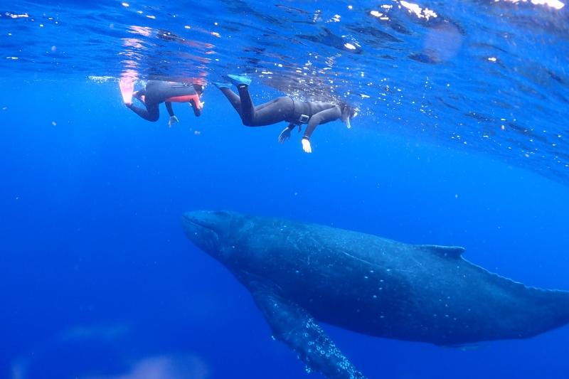 ホエールスイムでクジラを観察