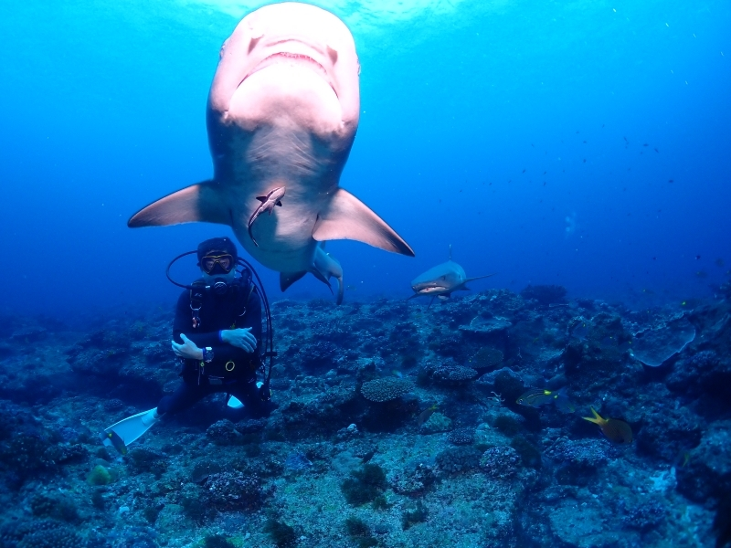 沖縄ダイビングサメ
