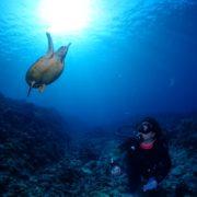 慶良間諸島でウミガメに会いたくて♪ 3種類のカメに会えました。