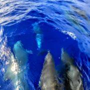 イルカとの遭遇