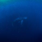 厳しい戦いでしたがなんとかいいクジラに!