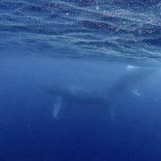 クジラ&講習